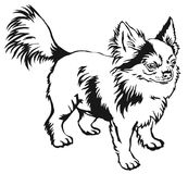 Decorative standing portrait of dog long-haired Chihuahua vector. Decorative contour portrait of standing in profile long-haired Chihuahua dog, vector isolated Royalty Free Stock Photo