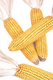 Decorative Corn Royalty Free Stock Photo