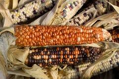 Decorative corn on display at the farmer's market Stock Image