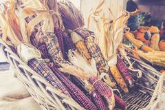 Decorative corn for sale in baskets at the farmer`s market for fall harvest royalty free stock photo