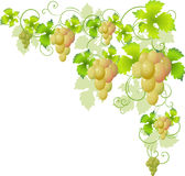 Decorative corner of the vine Royalty Free Stock Photo