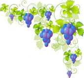 Decorative corner of the vine Stock Image