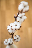 Decorative cotton Royalty Free Stock Photography