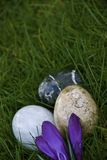 DECORATIVE CRYSTAL EGGS. Polished, egg shaped rocks are in a nest of grass and  crocus blooms Royalty Free Stock Image