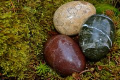 DECORATIVE CRYSTAL EGGS. Polished, egg shaped rocks are in a nest of moss and sedum Royalty Free Stock Photos