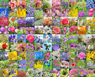 Decorative cultivated flowers. Collage Stock Image