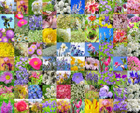 Decorative cultivated flowers. Collage Royalty Free Stock Photos