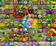 Decorative cultivated flowers. Collage Royalty Free Stock Photography