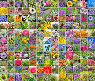 Decorative cultivated flowers. Collage Stock Photography