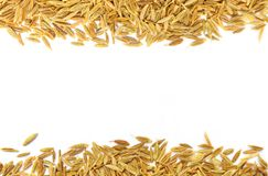 Decorative cumin seeds Stock Photos