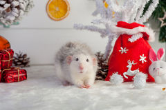 Decorative cute rat on a background of Christmas decorations Royalty Free Stock Image