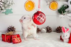 Decorative cute rat on a background of Christmas decorations Royalty Free Stock Photography