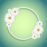 Decorative daisy frame Royalty Free Stock Photos