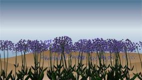 Decorative design Vector africanlily. Decorative design vector african lily flowers vector illustration