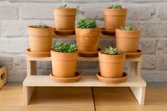 Decorative different plants Stock Images