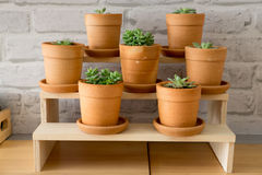 Decorative different plants in pot Royalty Free Stock Image