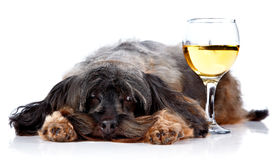 Decorative dog with a wine glass Royalty Free Stock Photos