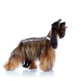 The decorative doggie cost on a white background. Stock Photo