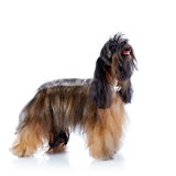 The decorative doggie cost on a white background. Stock Image