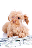 Decorative doggie and dollars. Royalty Free Stock Photos