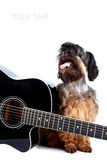 Decorative doggie and guitar. Royalty Free Stock Images