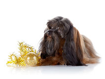 Decorative doggie with a New Years toy. Royalty Free Stock Photography