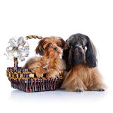 Decorative doggies with a basket and a bow. Royalty Free Stock Photos
