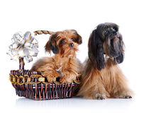Decorative doggies with a basket and a bow. Stock Photography