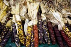Decorative dried corn stock image