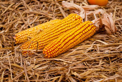 Decorative dried corn Stock Photo