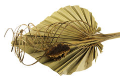 Decorative dried palm leaf Stock Photo