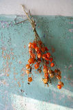 Decorative dry plant hanging on the old wall Royalty Free Stock Photography