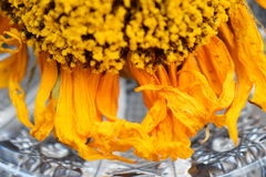 Decorative dry sunflowers on a black wooden table royalty free stock photos