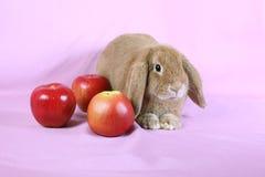 Decorative dwarfish rabbit Stock Photo