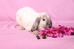 Decorative dwarfish rabbit Stock Images