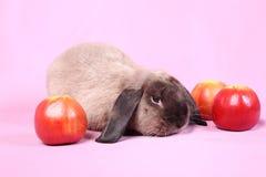 Decorative dwarfish rabbit Royalty Free Stock Photos