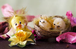 Decorative  easter chick with easter background Stock Image