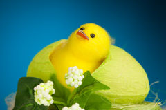 Decorative easter chicken Royalty Free Stock Photos
