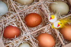 Decorative Easter chickens with eggs in crate Stock Image