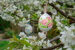 Decorative Easter egg hanging on flowering cherry tree with white flowers. Easter banner background. Vintage Decorative Easter egg hanging on flowering cherry stock images