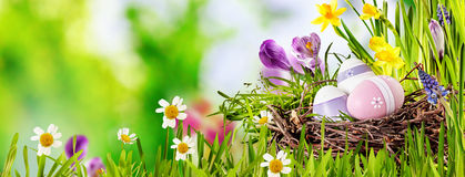 Decorative Easter Egg panorama banner. With three decorated eggs in a birds nest in fresh green spring grass with colorful flowers over an outdoor blurred stock image