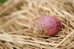 Decorative Easter egg in straw Royalty Free Stock Photo