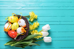 Decorative Easter eggs in nest and bright spring flowers on aqua Stock Photos