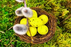 Decorative Easter eggs on pussy willow. In backgrounds Stock Photos