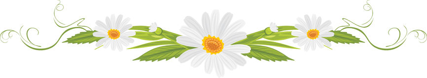 Decorative element with daisies Stock Photography