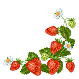 Decorative element with red strawberries. Illustration of berries and leaves.  Royalty Free Stock Photography