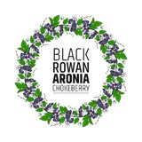 decorative element wreath of bunches of chokeberry. Aronia ornament stock images