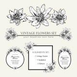 Decorative elements set. Hand drawn vector ink illustration of ranunculus helenae flowers. Picture frames. stock illustration