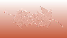 Embossed Maple Leaves Background Stock Photography