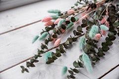 Decorative eucalyptus, color lagurus royalty free stock photos
